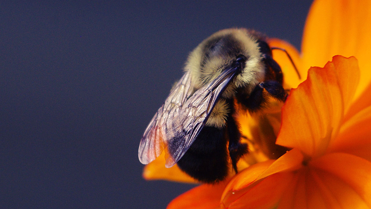 Jeremy Houchens, Photography, Bee Wings