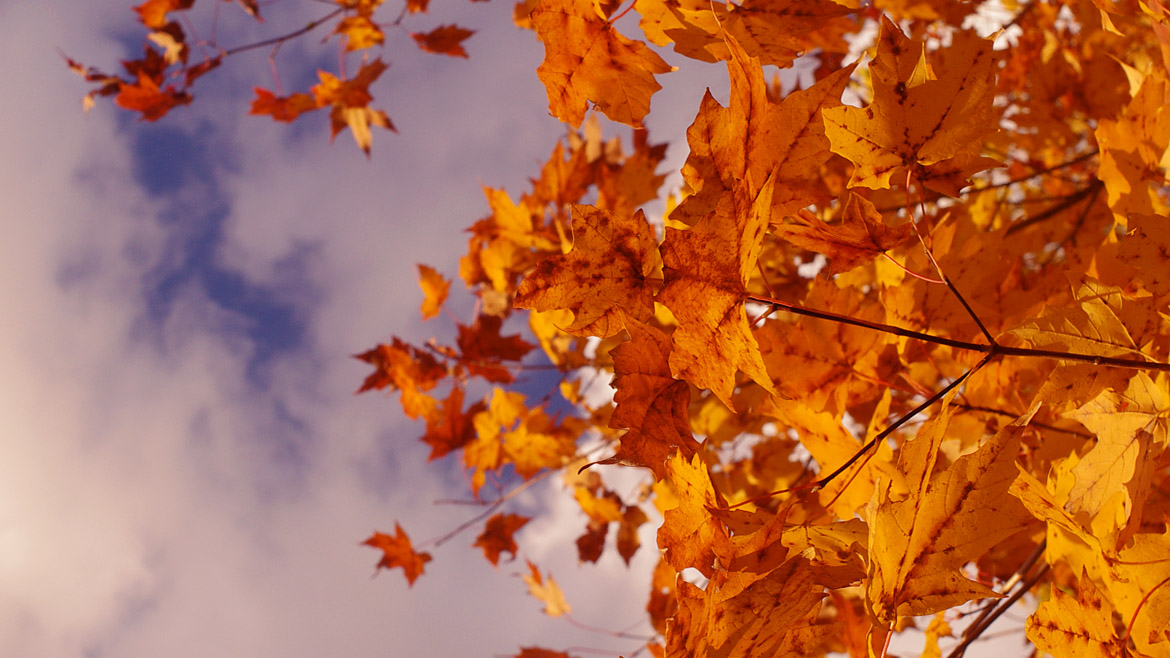 Jeremy Houchens, Photography, Fall Leaves