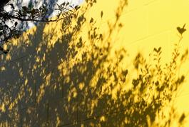 Jeremy Houchens, Photography, Yellow Wall