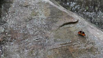 Butterfly on a Rock